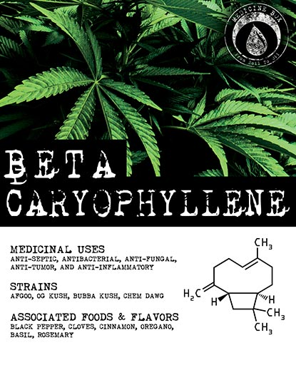 Terpene Tuesday Caryophylene for Medicine Box